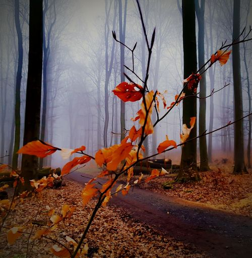 Forest Forestwalk Last Old Leaves Nature Nature Photography Trees Foggy Foggy Morning OpenEdit Tadaa Community Nature On Your Doorstep Beautiful Nature EyeEmBestPics EyeEm Best Shots EyeEm Nature Lover EyeEm Gallery