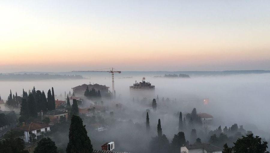 High angle shot of trees on misty landscape