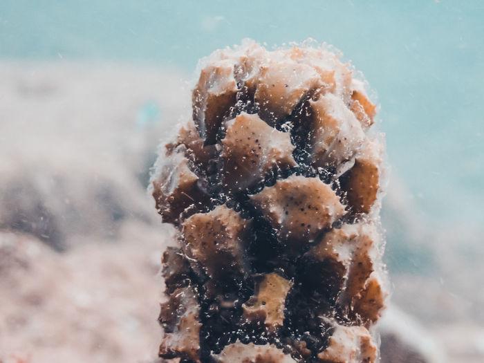 Close-up of ice cream in sea