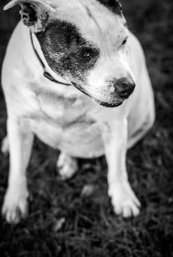 Doggy Dog Animal Themes One Animal Pets Domestic Animals Mammal Day Outdoors Close-up No People Nature Pet Portraits
