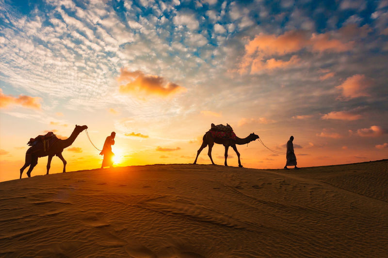 Silhouette people riding horse in desert against sky during sunset