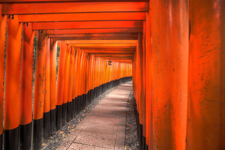 inari fushimi shrine in kyoto Japan Architectural Column Architecture Belief Built Structure Diminishing Perspective Direction Famous Place Footpath In A Row Inari Fushimi Kyoto Landmark Long No People Orange Color Outdoors Place Of Worship Religion Repetition Shrine Spirituality The Way Forward Tunnel