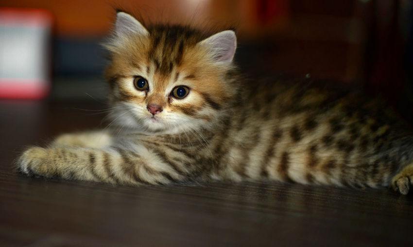 Close-up of kitten relaxing on floor