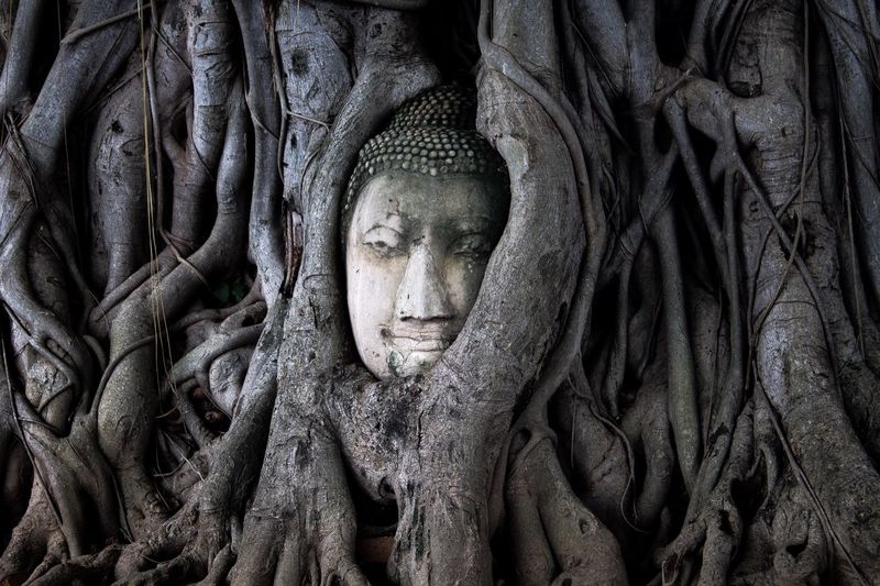 Wat Mahathat - Ayutthaya, Thailand 🇹🇭 #buddhahead #roots #iconic #ruins #history #thai #wat #ayutthaya Travel Photography Travel Destinations Travel Roots Ayutthaya Ruins_photography Iconic Symbol Buddha Thailand Full Frame Backgrounds Art And Craft Pattern Representation Close-up Religion First Eyeem Photo