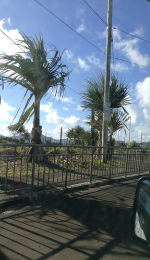 Driving And Shooting Roadside Palm Tree Groups Metallic Grid Shadows And Shades
