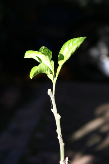 a seed were growing Growth Plant Plant Part Leaf Close-up Green Color Nature Freshness Beauty In Nature New Life Vulnerability  Plant Stem Beginnings Day Seedling Outdoors Food Plantation Sunlight Playing Hide N Seek