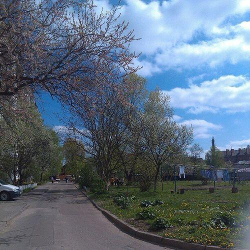 весна двор природка фото красота
