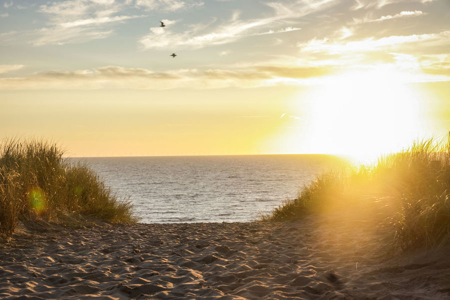 Nature Seascape Beautiful Day Genießen Beauty In Nature Idyllic Tranquility Tranquil Scene Sky Beautiful Scenery Hand In Hand You And Me Seite An Seite Scenics Scenery Calm Travel Dunes Bird Flying Water Sea Sunset Beach Sunlight Sun Gold Colored Sunbeam Horizon Over Water