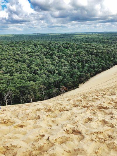 Sand Dune WoodLand
