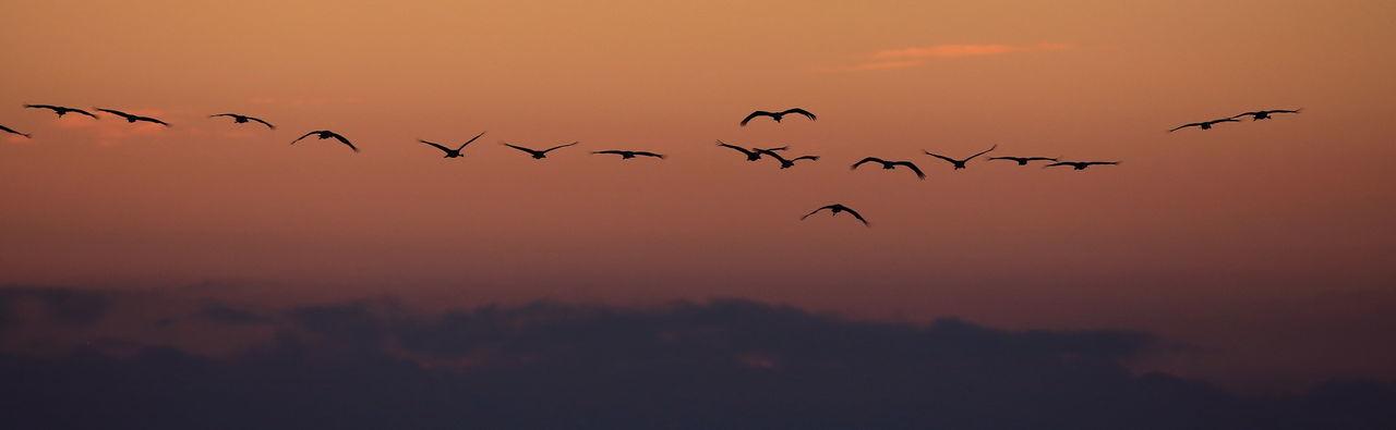 Flock Of Birds Flying Against Sky At Sunset
