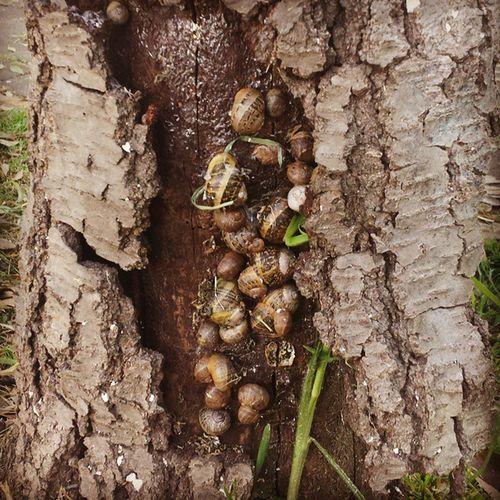 familia de caracoles Diciembre