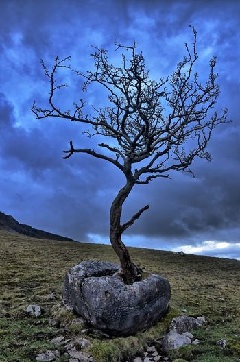 Bare tree on rock against sky