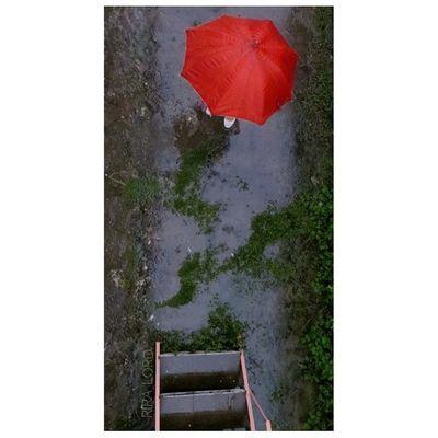 ... معجزه ای می خواهد.. اعجازی از جنس خاک خیس خورده.. تا عجز را بشوید از رخ برگِ به اجبار سبز! و گلی که با سیلی باد گرم صورتش را سرخ نگاه می دارد... وجب به وجب باغ ذکر می گوید... ظهور کن.. یا حضرت باران! ریرا (دلم بارون میخواد عجیب..عجیبا!) Photorainy