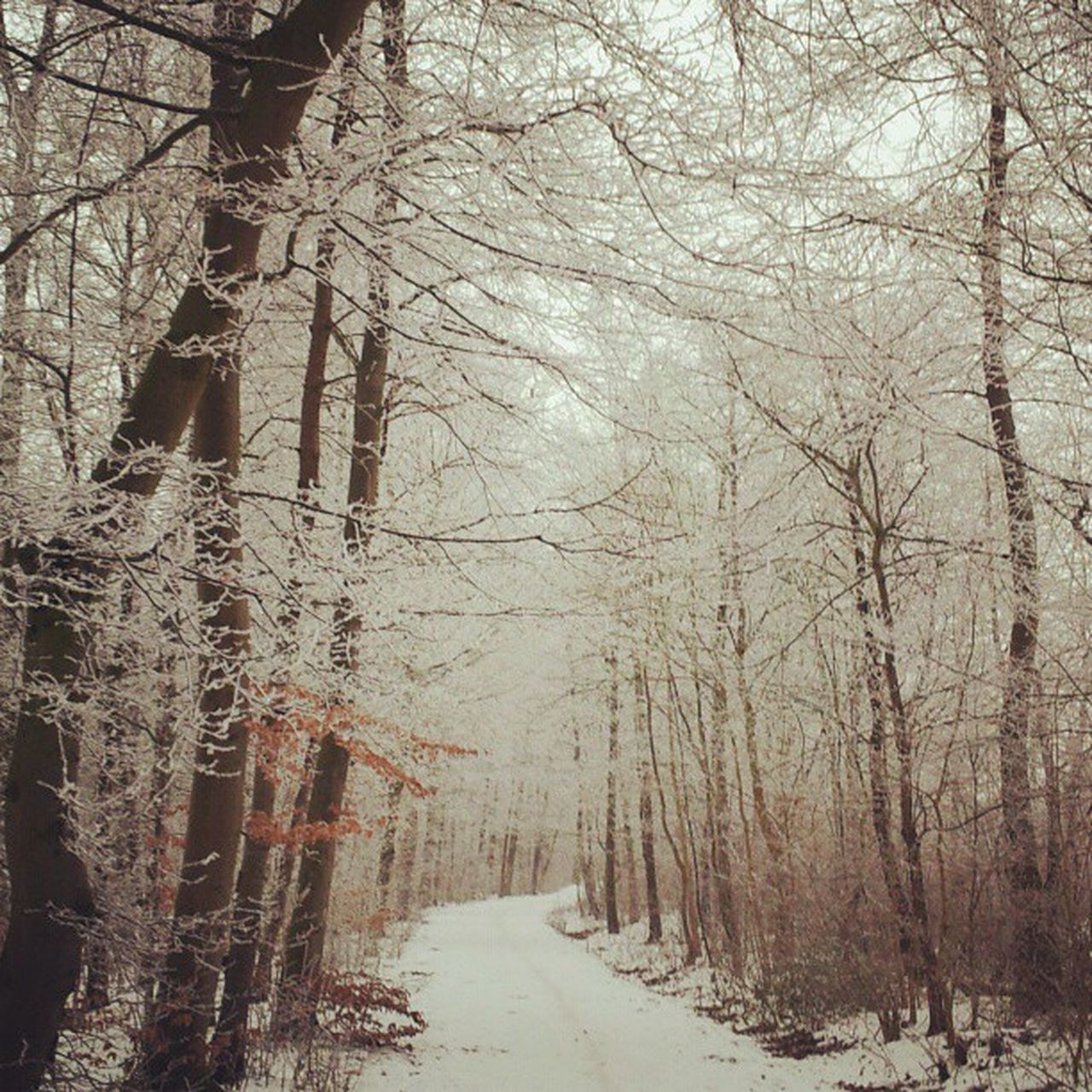 bare tree, winter, nature, tree, cold temperature, snow, tranquility, no people, tranquil scene, day, branch, beauty in nature, forest, outdoors, scenics