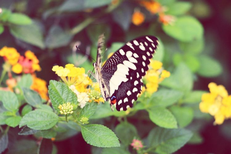 Papillon Butterfly Butterflies Taking Photos Photography Street Photography Check This Out Hello World