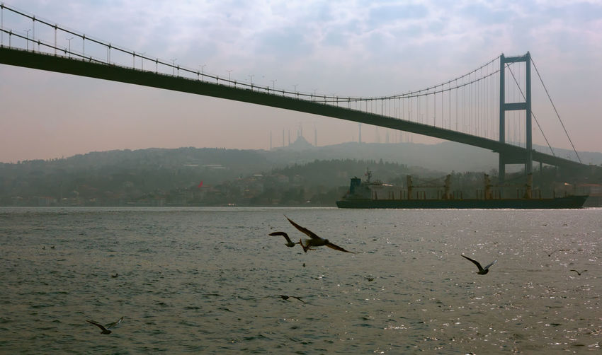 The Bridge Bird Bosphorus Bosphorus Bridge Bosphorus, Istanbul Bosphorus, Water, Sea, Black Sea, Blue, Waves, Sky, Sky Line, Clouds, Cloudy, White, Blue, Cold, Winter, Bridge - Man Made Structure Cloudy Cloudy Day Flying Outdoors Seagull Sky Sunrays Suspended Suspension Bridge Water