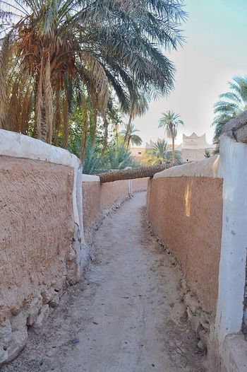 Libya Ghadamis This Is Libya <3<3  Archaeological Tradition Heritage HeritageVillage Oldcity Palm Tree Lane Libyan Style Passage Passageway Libya Nature  Ghadames Nikon D3200 Snapseed Ceilling ليبيا غدامس