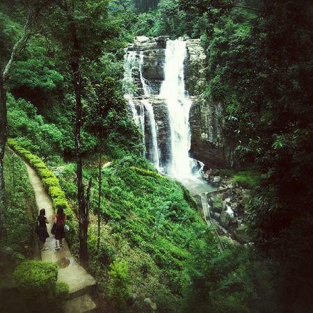 Too much of Green overflowing:) Placetovisit Ramboda Waterfalls SriLanka tourist destination green
