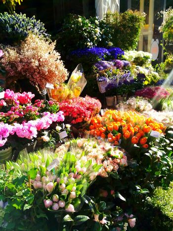 In april 2015 I had to buy a bouquet for a funeral of someone dear to my heart. I was looking for a good flower shop when I passed this store. Beauty really can touch you at most unexpected times. Bright Colors Color Photography Check This Out Paris, France  Hello World Eyem Gallery From My Point Of View From Where I Stand Eye4photography  Nature Photography Parisian Chic Flowers, Nature And Beauty Cut Flowers Sunshine Flower Porn Flowers,Plants & Garden Flower Shop Sidewalk Getting Inspired Up Close Street Photography Summer Vibes The Street Photographer - 2016 EyeEm Awards Colour Of Life