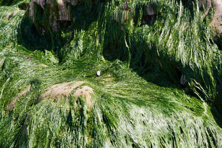 No People Nature Green Color Day Outdoors Growth Beauty In Nature Grass Tree Planet Earth Close-up Freshness Seaweed Covered Rock