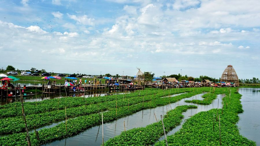 Aquatic plants in canal. Relaxing Architecture River Water City Sky Landscape Green Growing Life Market Blue Floating White Plants Lake Thai Fresh Farmland Grassland Lakeside Aquatic Canel Cloud - Sky Agricultural Field Built Structure Plant Building Exterior Nature Green Color Growth Building Day Grass Outdoors Land No People Agriculture Tropical Climate Hedge