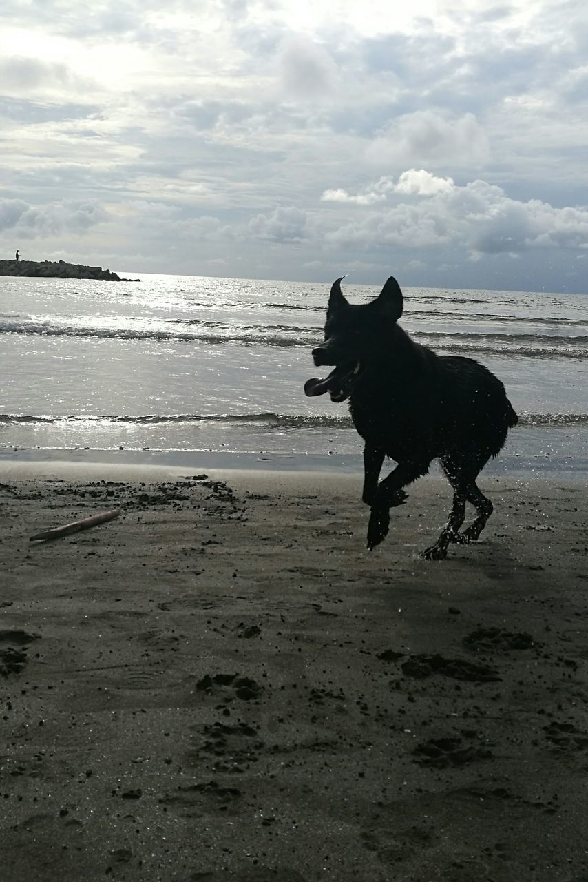 beach, dog, sea, one animal, domestic animals, pets, animal themes, sand, water, shore, cloud - sky, sky, mammal, nature, horizon over water, running, outdoors, no people, standing, day, wave, beauty in nature