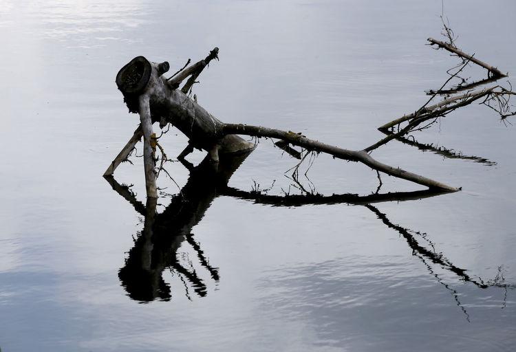 Dead tree on lake against sky