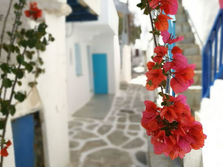 Nofilter Greece GREECE ♥♥ Greece Islands Street Hello World Check This Out Enjoying Life Paros_island Flower Flowers