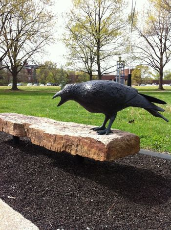 Awesome bench on campus at UK! Raven Sitting Outside University Of Kentucky