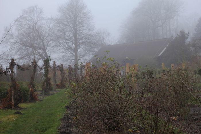 Wintergarten mal anders Bare Tree Cold Temperature Nature Season  Winter Winter Garden