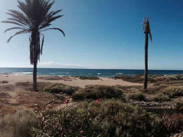 Wild beach. NevermindRecords Wild Beach Playa Atlantic Ocean Surf Palm Trees Tenerife Canary Islands SPAIN