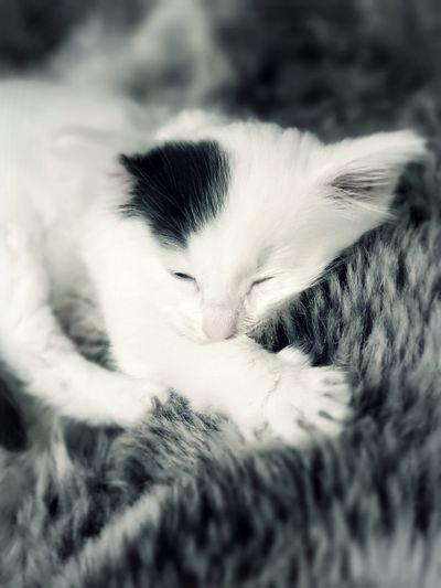Softness Soft