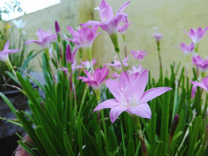 Glims of pink Flower Freshness First Eyeem Photo