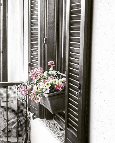 Window Flower No People Indoors  Door Window Sill Home Interior Day Curtain Architecture Close-up Freshness Milano Italy🇮🇹 Samsungphotography Building Exterior Flower Photography Nature Plant