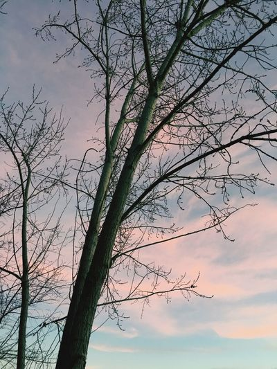 Fall colors, evening sky, trees Tree Bare Tree Nature Branch Beauty In Nature Sky Tranquility No People Outdoors Sunset Scenics Tranquil Scene