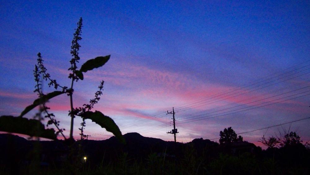 いつかの空 Sunset Skyporn Pink Sky Silhouette Nature Beauty In Nature Nature From My Point Of View EyeEm Nature Lover Beauty In Nature Taking Photos 電柱♡Love
