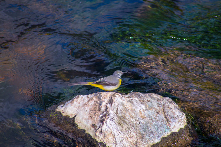 EyeEm Best Shots EyeEm Nature Lover EyeEmBestPics EyeEm Best Shots - Nature Beauty In Nature Wonders Of Nature Waterfall Yellow Wagtail Streem Bird Water Perching Gray Heron Ibis Close-up Shallow Clear Standing Water Calm