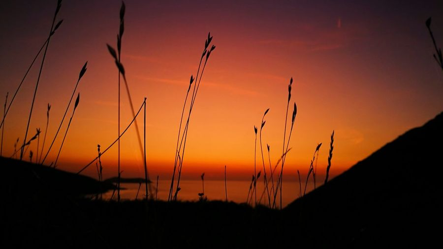 Close-up of silhouette landscape against sunset sky