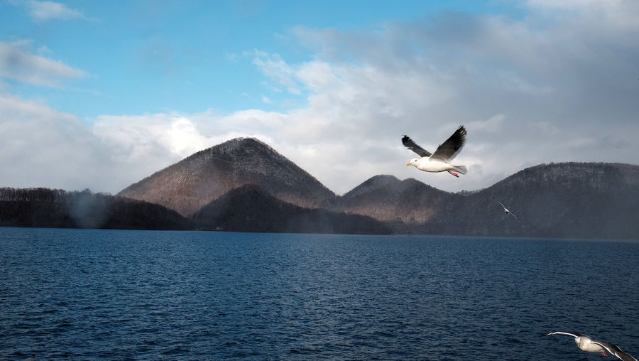 Seagull flying over lake against sky