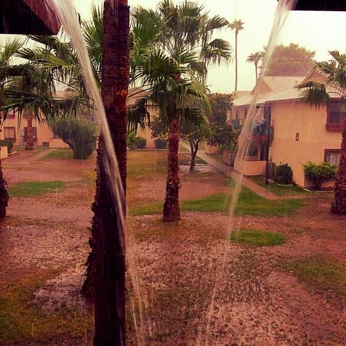 Arizona Monsoon Down Pour Rain Storms Home Is Where The Art Is Water Raining Palm Trees Glendale