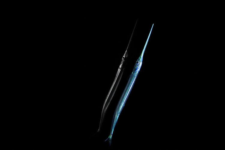 Close-up of light trails against black background