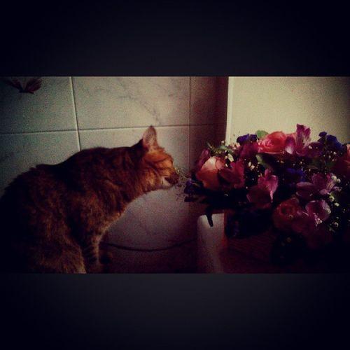 Кошка любит кушать цветы)))) кошка кошкаестцветы цветы Nice