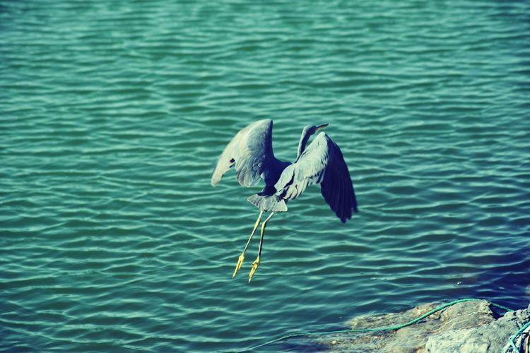 High angle view of heron flying over lake