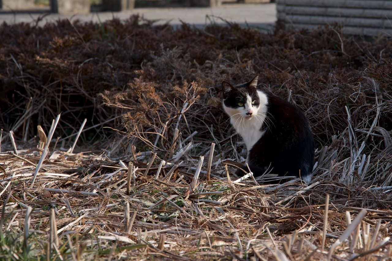 Cat Sitting On Dry Grass