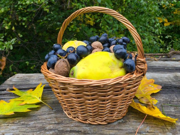 Hamper basket with grapes,quinces and nuts on wooden table with yellow leaves Basket Yellow Fruit Food And Drink Day Outdoors Food No People Freshness Close-up Nature Autumn Fall Crop  Harvest Ripe Grapes Quinces Wooden Table Rustic Hamper Leaves