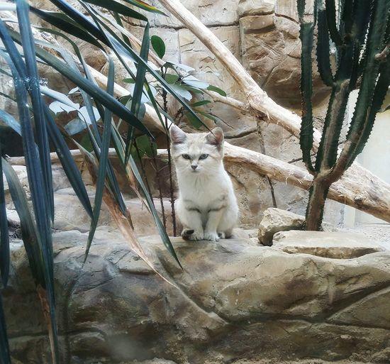 Solitude Loneliness Cats Zoo Berlin Sadness EyeEm Best Shots Animals Animal_collection AntiM