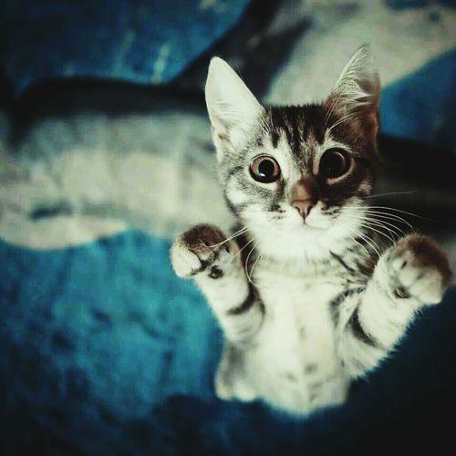 Çünkü Crazy Cat Lady olmak bunu gerektirir. Hi! Check This Out Cat♡ Cat Lovers #cat