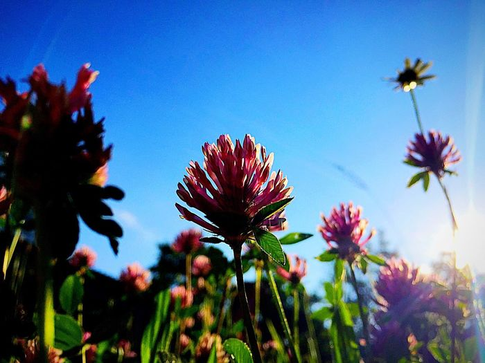 Flowers In The Sun Photography Enjoying Nature EyeEm Gallery Summer Heaven Sky Check This Out Sun Nature Photography Enjoying Life Nature_collection Nature Taking Photos Enjoy The Moment And Don't Forget LifeLoveLaugh Im Schwabenländle