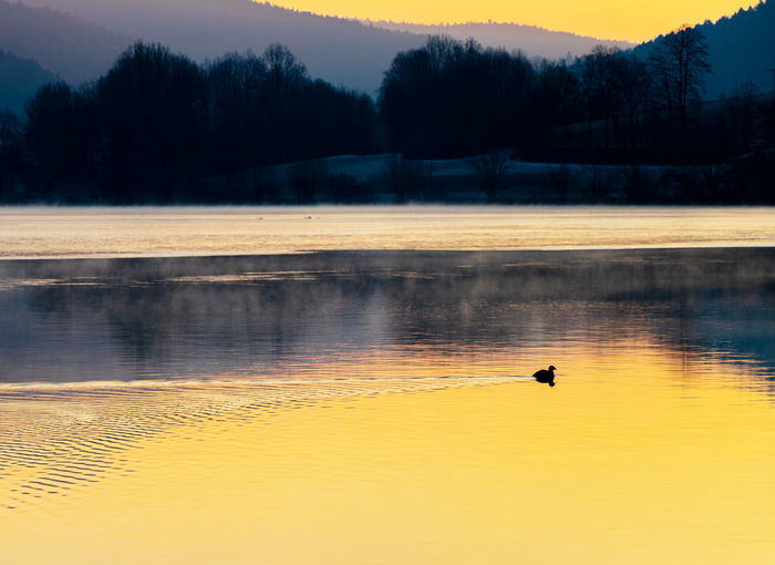 View of birds in lake at sunset