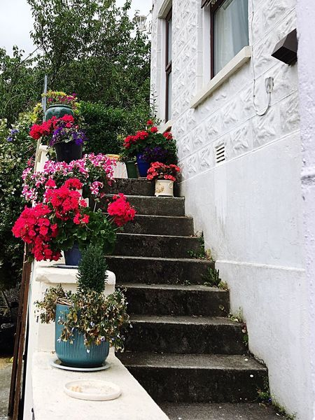 EyeEm Selects Steps And Staircases Building Exterior Textures And Surfaces Showcase July EyeEm Best Shots Cornish Village Beautiful Cornwall EyeEm Nature Lover Flower Pots Stairways Architecture Staircase Outdoors My Point Of View EyeEm Gallery Close-up Peaceful Residential Building